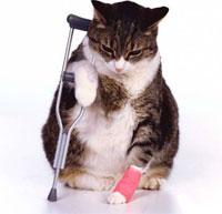cat diseases